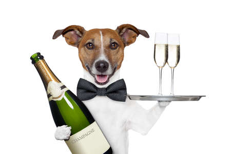 dog toasting new years eve
