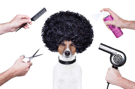 hairdresser  scissors comb dog dryer hair
