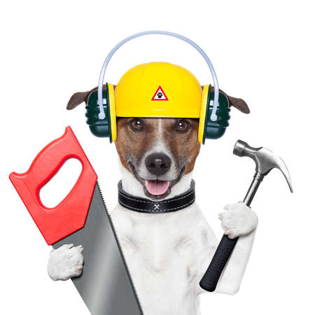 Photo pour handyman and craftsman dog with hammer and saw - image libre de droit