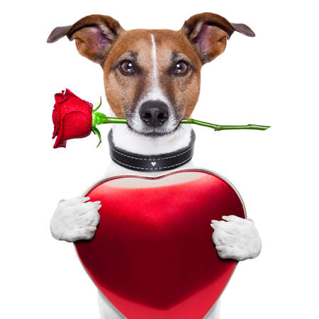 Foto de valentine dog with red rose and red big heart - Imagen libre de derechos