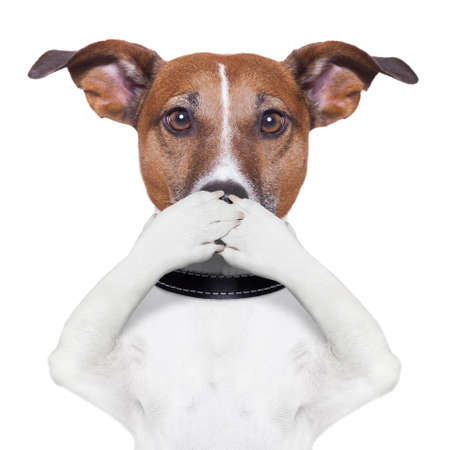 covering the mouth dog with paws