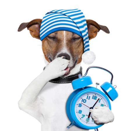 sleepyhead dog tired with clock and funny nightcap
