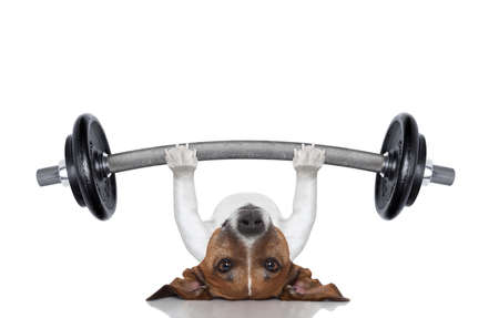 Foto de fitness dog lifting a heavy big dumbbell - Imagen libre de derechos