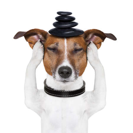 dog meditates with hot stones  on top