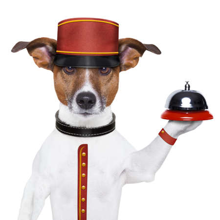 Photo pour bellboy dog holding a bell with red hat - image libre de droit