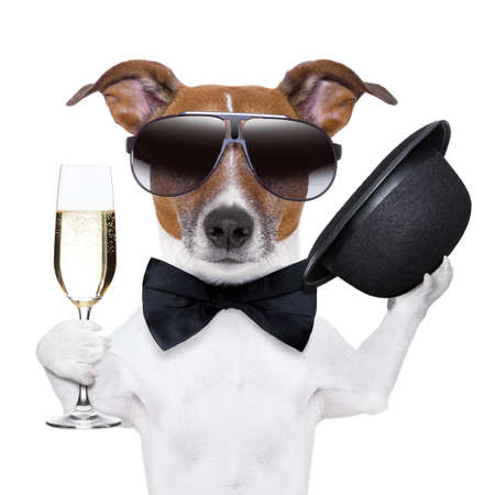 cheers dog with  a glass of champagne and a black hat
