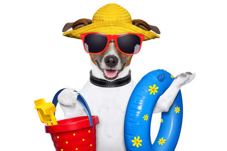 dog ready for beach with bucket swim ring and funny hat