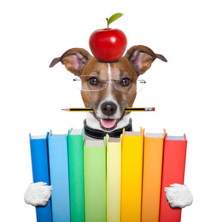 Photo for dog holding a big stack of books - Royalty Free Image
