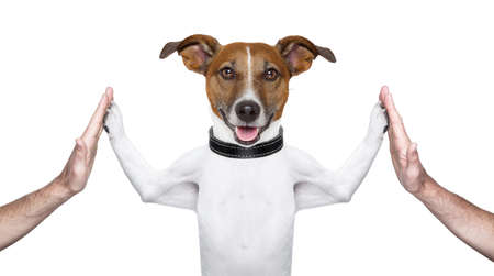 Photo for dog giving high five on both sides with male hands - Royalty Free Image