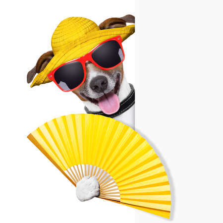 Photo pour summer cocktail dog cooling of with hand fan behind banner - image libre de droit