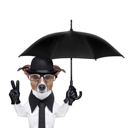 british dog with black bowler hat and black suit holding am umbrella
