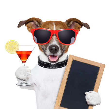 funny cocktail dog holding a martini glass