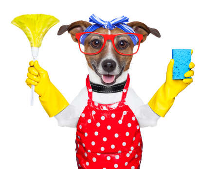 housewife dog with rubber gloves  and a feather duster