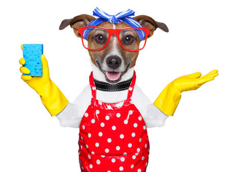 Photo for housewife dog with rubber gloves and a blue sponge - Royalty Free Image