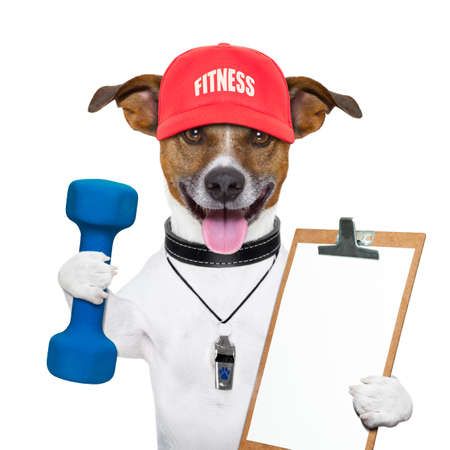 personal trainer dog with blue dumbbells and red cap