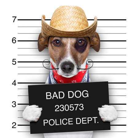 Photo pour mugshot of a mexican very bad dog - image libre de droit