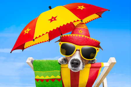 Photo pour mexican dog on vacation relaxing on a deck chair under an umbrella - image libre de droit