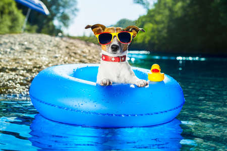 Photo pour dog on  blue air mattress  in water refreshing - image libre de droit