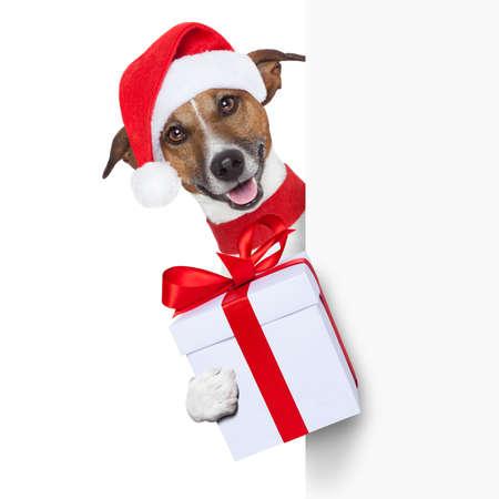 christmas dog as santa behind placard with big present as a gift