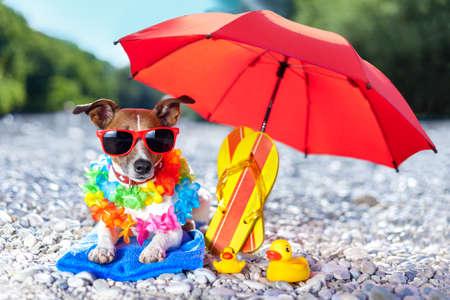 dog under umbrella at beach with yellow rubber ducks