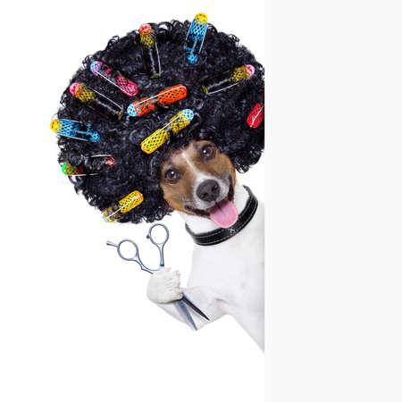 hairdresser  scissors  dog beside white banner with hair rollers