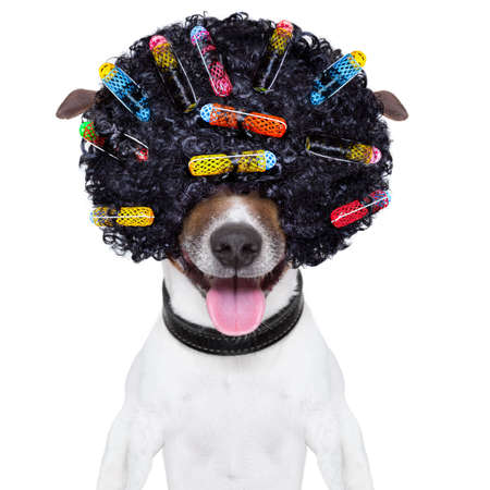 dog with a crazy curly afro look wig and hair curlers
