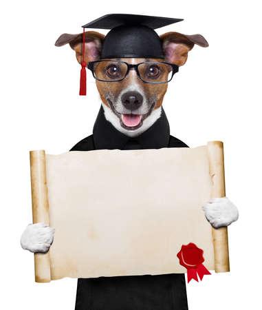 Photo pour happy graduate dog holding a big diploma - image libre de droit