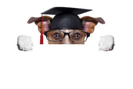 Photo pour graduate dog hiding behind a blank placard - image libre de droit