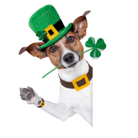 st. patrick's day dog with a clover behind a banner