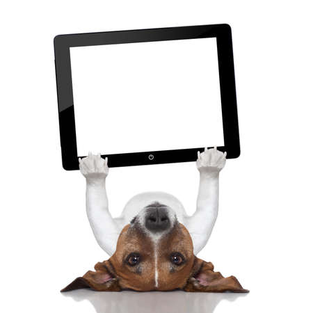 dog holding a tablet pc lying upside down