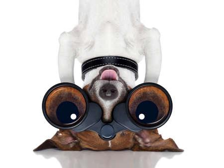 Photo pour binoculars nosy dog observing upside down - image libre de droit