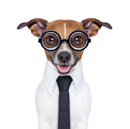 dumb business dog  with funny glasses and suit