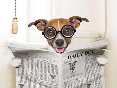 Foto de crazy silly dog sitting on toilet and reading magazine - Imagen libre de derechos