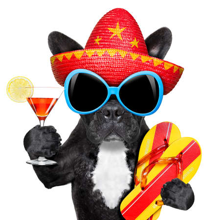 dog with martini glass and mexican hat