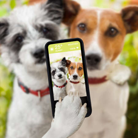 couple of dog taking a selfie together with a smartphone
