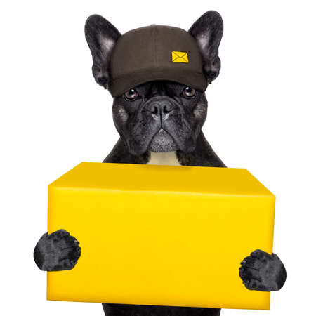 postal dog delivering a big yellow package