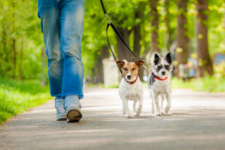 owner and two dogs going for a walk