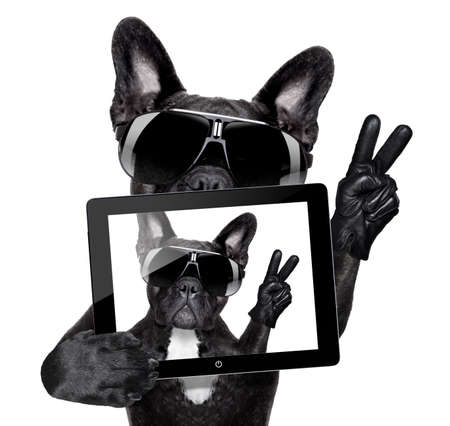 french bulldog making a selfie with tablet pc