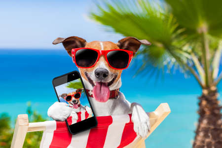Photo pour dog taking a selfie in summer holidays - image libre de droit