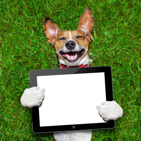 dog holding a blank tablet pc lying on green grass