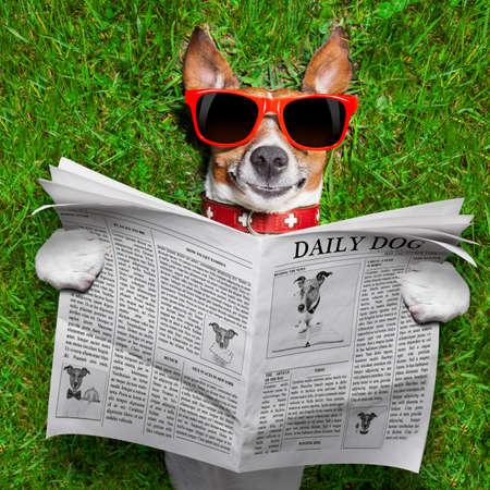 Photo pour dog reading newspaper and relaxing on grass in the park - image libre de droit