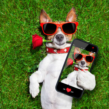 Photo pour dog with a red rose in his mouth taking a selfie - image libre de droit