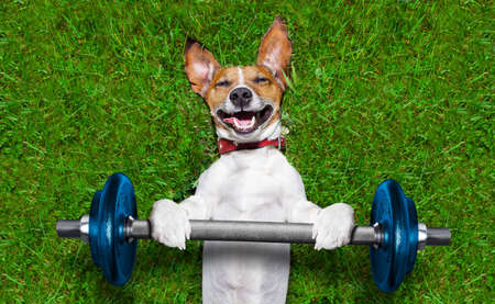 Photo for super strong dog lifting  bing blue dumbbell bar - Royalty Free Image
