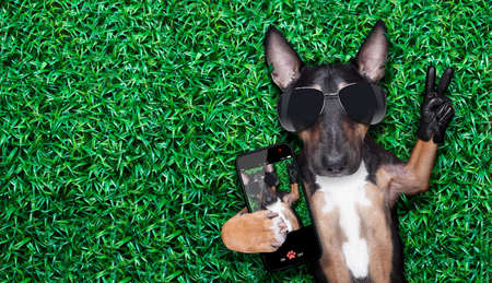 Photo for dog taking a selfie on a meadow with peace and victory fingers - Royalty Free Image