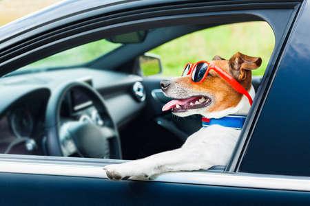 Foto de dog leaning out the car window with funny sunglasses - Imagen libre de derechos
