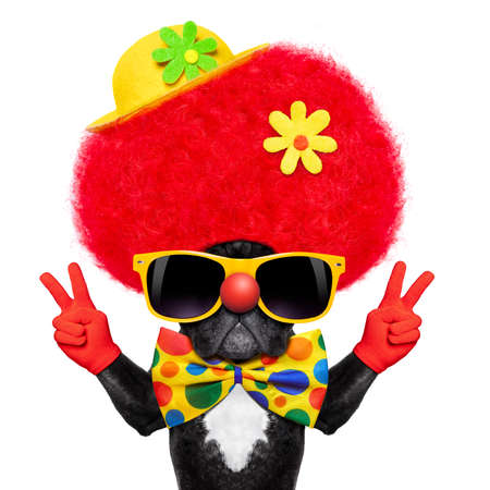 Photo pour silly dog wearing clown costume with peace or victory fingers - image libre de droit