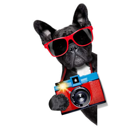 cool tourist photographer dog taking a snapshot or picture with a retro old camera