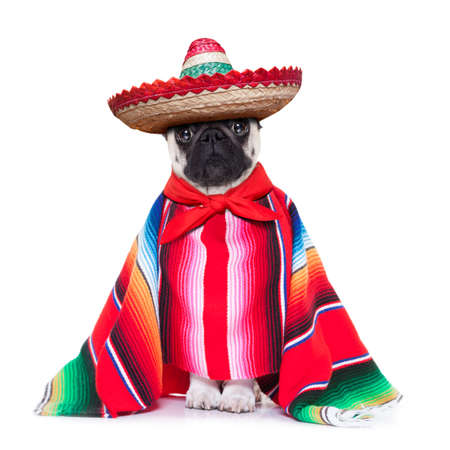 mexican dog with sombrero and a big poncho