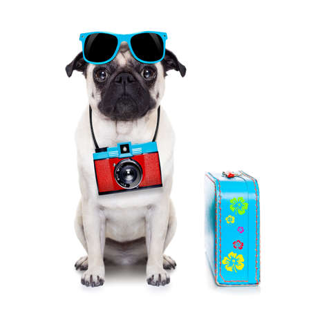 Photo pour pug dog looking so cool with fancy sunglasses  and photo camera - image libre de droit