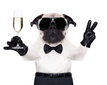 pug with a  champagne glass and victory or peace fingers toasting for new year , looking so cool
